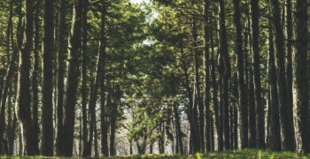 Forest bathing: A therapy worth trying out